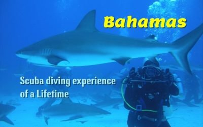 The Bahamas has some of the most beautiful reefs in the world for scuba diving.