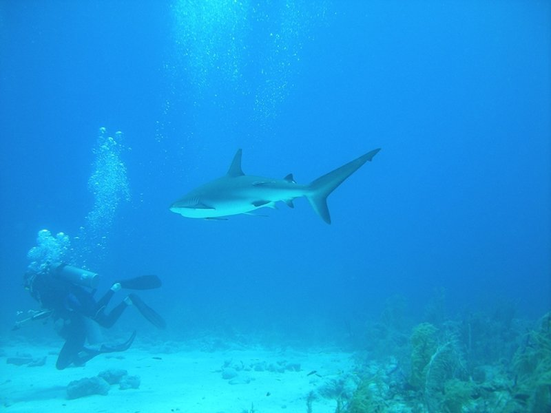The Bahamas is a beautiful place to visit because of its friendly natives and great food. It is also known for it scuba diving quality.