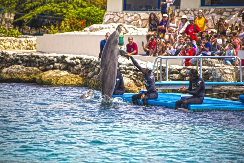 Royal Sea Aquarium Resort Curacao. Imagine being able to go to the edge of the water any time you choose and be able to see dolphins at play, and every time you come back into the resort there are sea lions right there. It is fantastic.