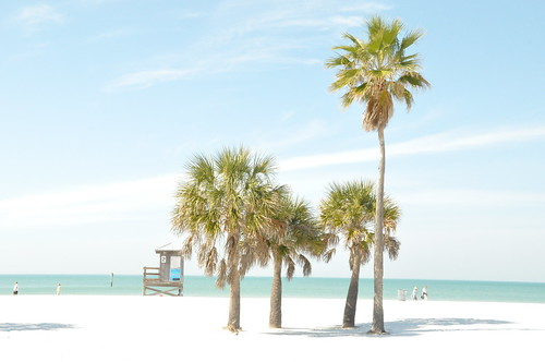 In addition, Clearwater Beach stretches for over five uninterrupted miles which includes Caledesi Island
