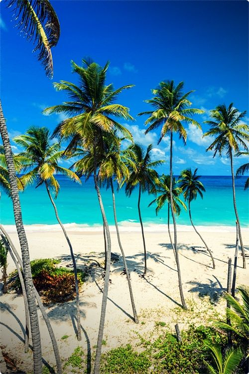 Barbados, Caribbean vacation packages is among the most interesting tourist destination for nature lovers. This magnificent coral island is located at the east Caribbean Sea.