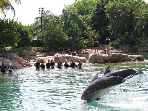Orlando Disney World Vacation Packages. Discovery Cove