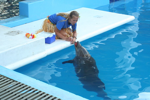 Clearwater Aquarium- This is a great place to take the kids and see some of Florida's natural sea life.