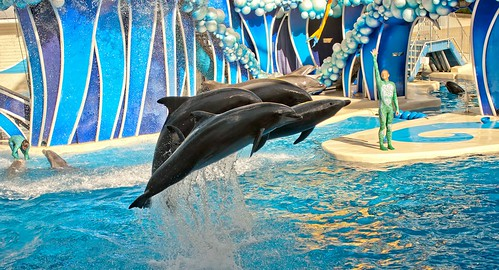 Florida Sea World houses many different marine creatures, and some of the tricks that these animals have been trained to do are simply amazing!