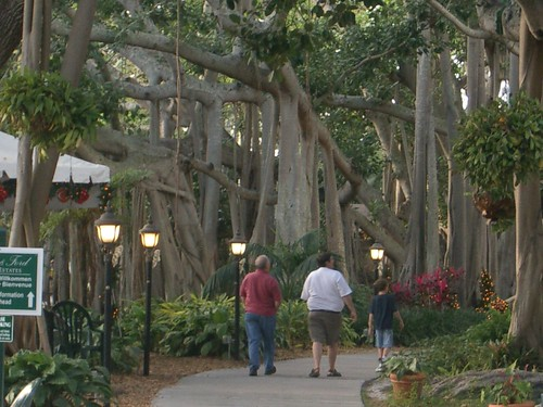 Thomas Edison and Henry Ford fell in love with Fort Myers and Banyan Trees