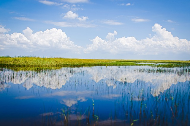 The Florida Everglades is a most unusual public park, consisting of over a million acres of swamps, jungles, and prairies. Over one million people per year visit the Everglades.
