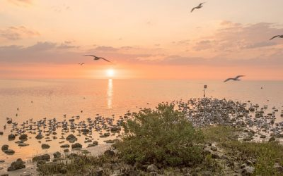 There is a place of serenity and undisturbed peace that you may travel to, far from Miami and other major hubs of Florida. Cape San Blas is a destination that those looking for pure relaxation should head for.