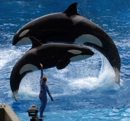 Shamu show. Whether you are on a limited budget or have enough money to get a luxurious hotel, these Sea World Florida package deals can give you the best rates available.