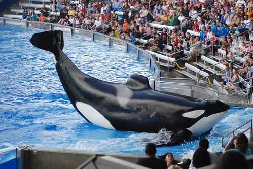 Sea World Florida. There are people who thought that they could not afford heading off to and see spectacular Shamu shows.