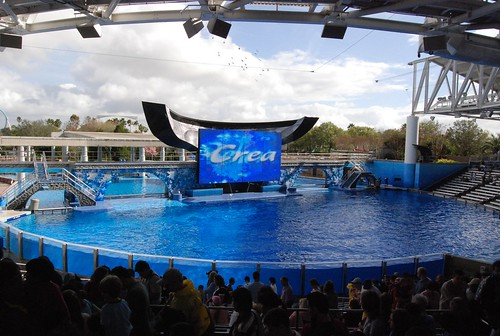 If you are into thrilling rides and sea animals, there is no other place to go than Sea World.