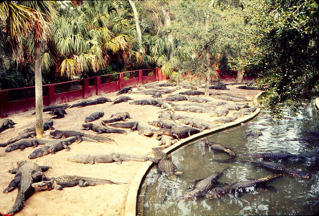 The St. Augustine Alligator Farm has it all for you