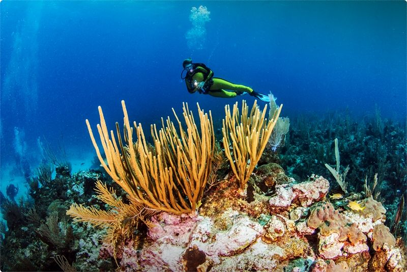 There is a lot of variety in Ambergris Caye diving. Since it is the most popular tourist spot and dive destination in Belize, there are a lot of dive operators to choose from.