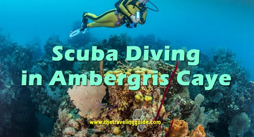 Belize, Scuba Diving in Ambergris Caye